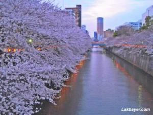 Kanda River 01