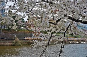 Kanda River 03