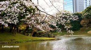 Koishikawa Korakuen 04