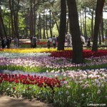 Hitachi Seaside Park 07