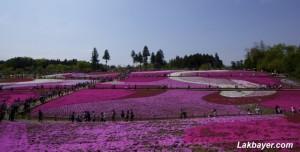 Hitsujiyama Park 04