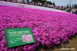Hitsujiyama Park 05