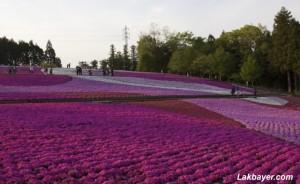 Hitsujiyama Park 09