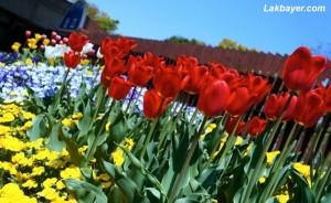 Showakinen Park 02