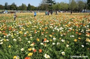 Showakinen Park 09