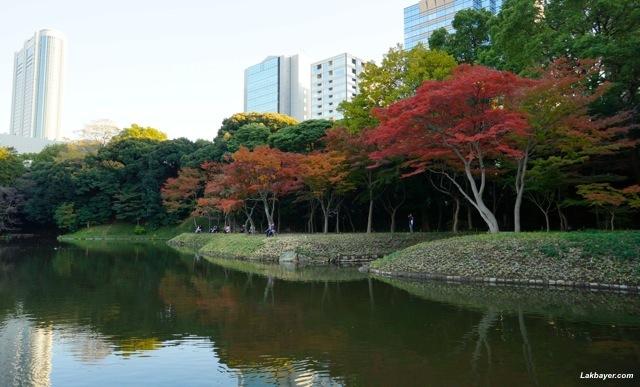 Koishikawa Korakuen - Momiji Grove