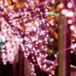 Meguro River Illumination 2013