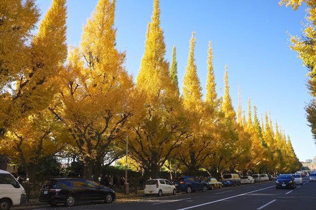 Meiji-jingu Gaien Ginkgo Ave 01