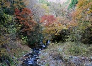 Okutama Autumn Hike