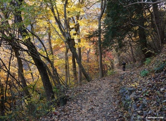 Okutama Autumn Hike - rocky mountain trail