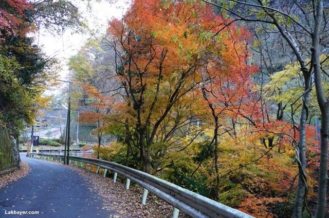 Okutama HIke - paved asphalted road