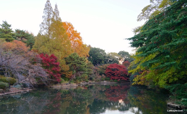 Shinjuku Gyoen - lower pond