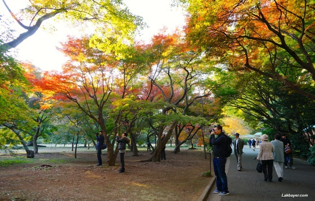 Shinjuku Gyoen - momiji in early autumn state