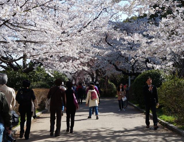 Chidorigafuchi walkway