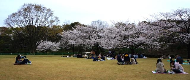 Kitanomaru Park 02