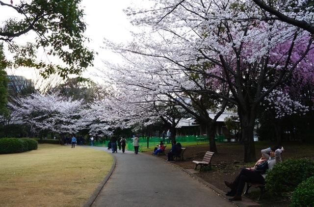 Kitanomaru Park 03