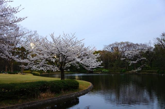 Kitanomaru Park 04