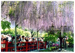 Kameido Tenjin Shrine (kameidotenjin.or.jp)