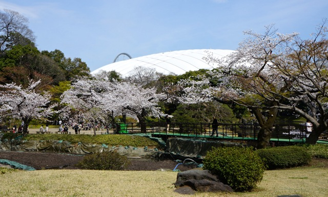 Korakuen - Cherry Trees 01