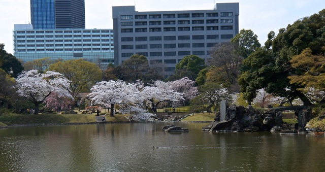 Korakuen - Cherry Trees 02