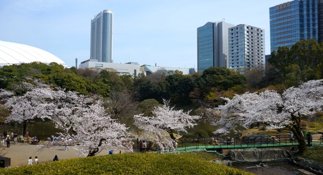 Korakuen - Cherry Trees 04