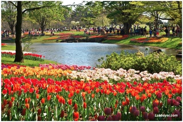Japan Flower Festival Park Flower Festival