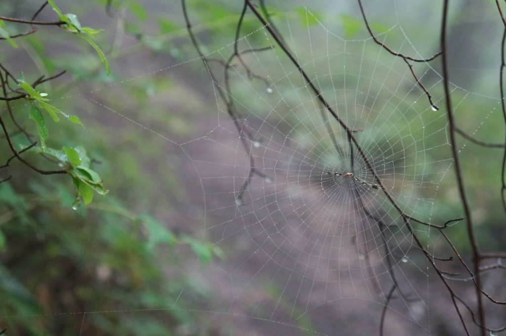Mt. Jinba - spider web