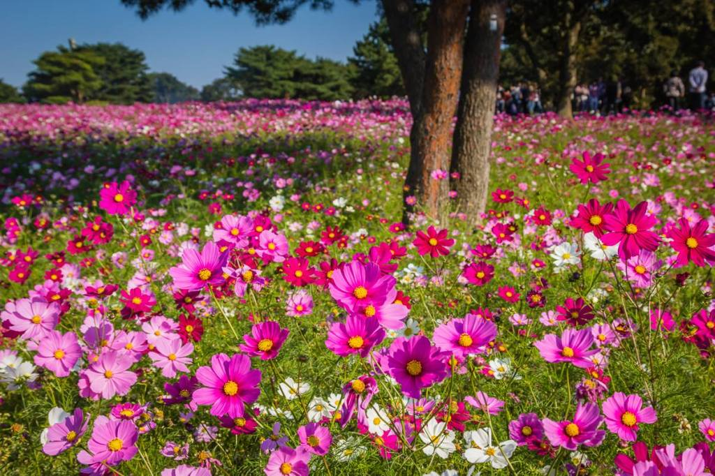 Autumn 2014: Hitachi Seaside Park 06