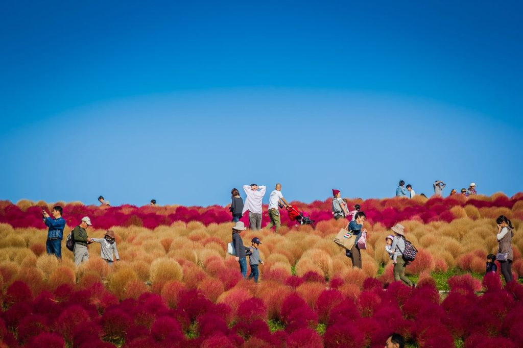 Autumn 2014: Hitachi Seaside Park 05
