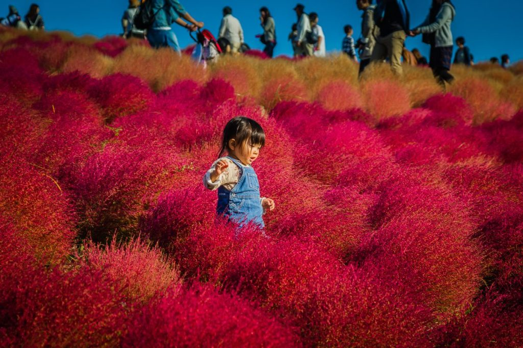 Autumn 2014: Hitachi Seaside Park 03