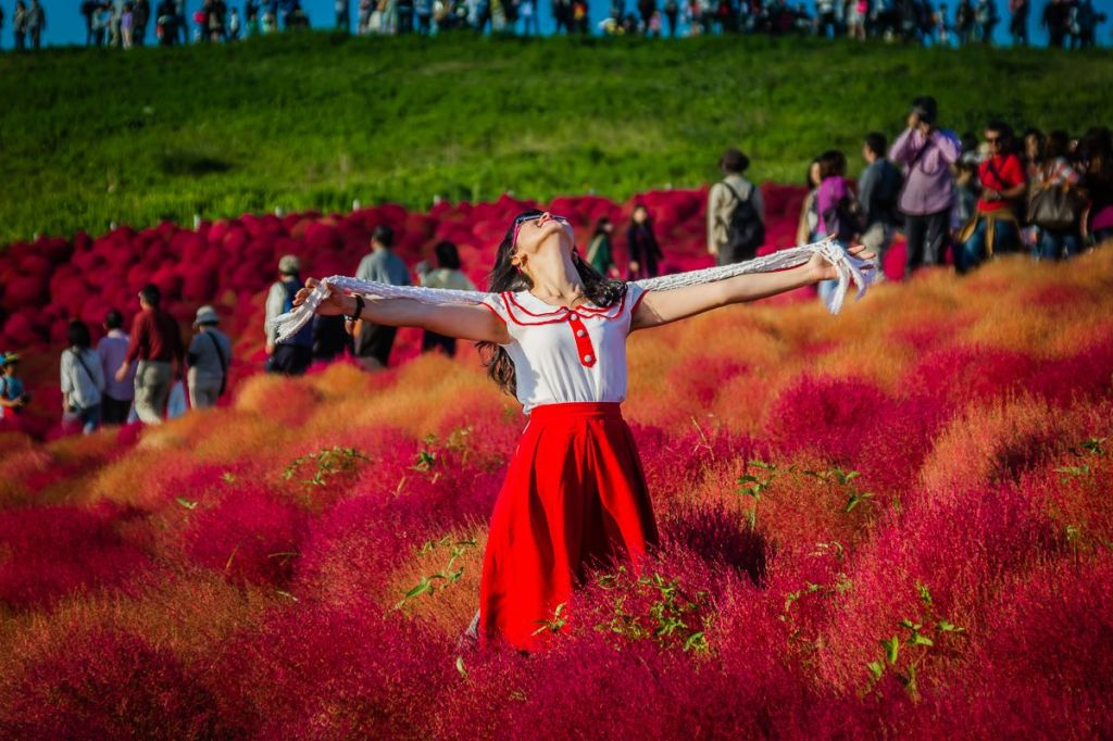 Autumn 2014: Hitachi Seaside Park 04