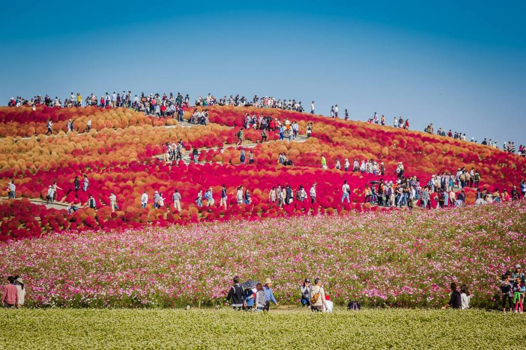 Autumn 2014: Hitachi Seaside Park 01