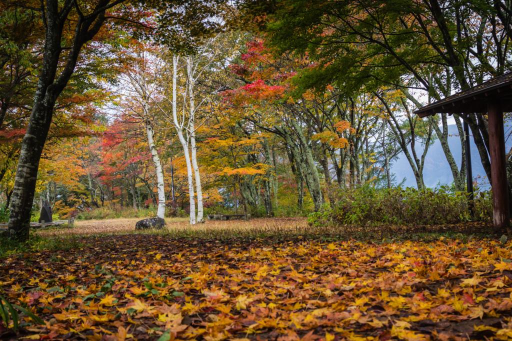 Autumn 2014: Kawaguchiko 11