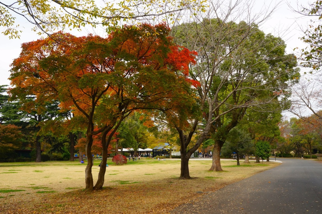 Showakinen Park Autumn 2014 - 01