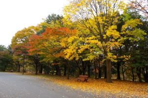 Showakinen Park Autumn 2014 - 04
