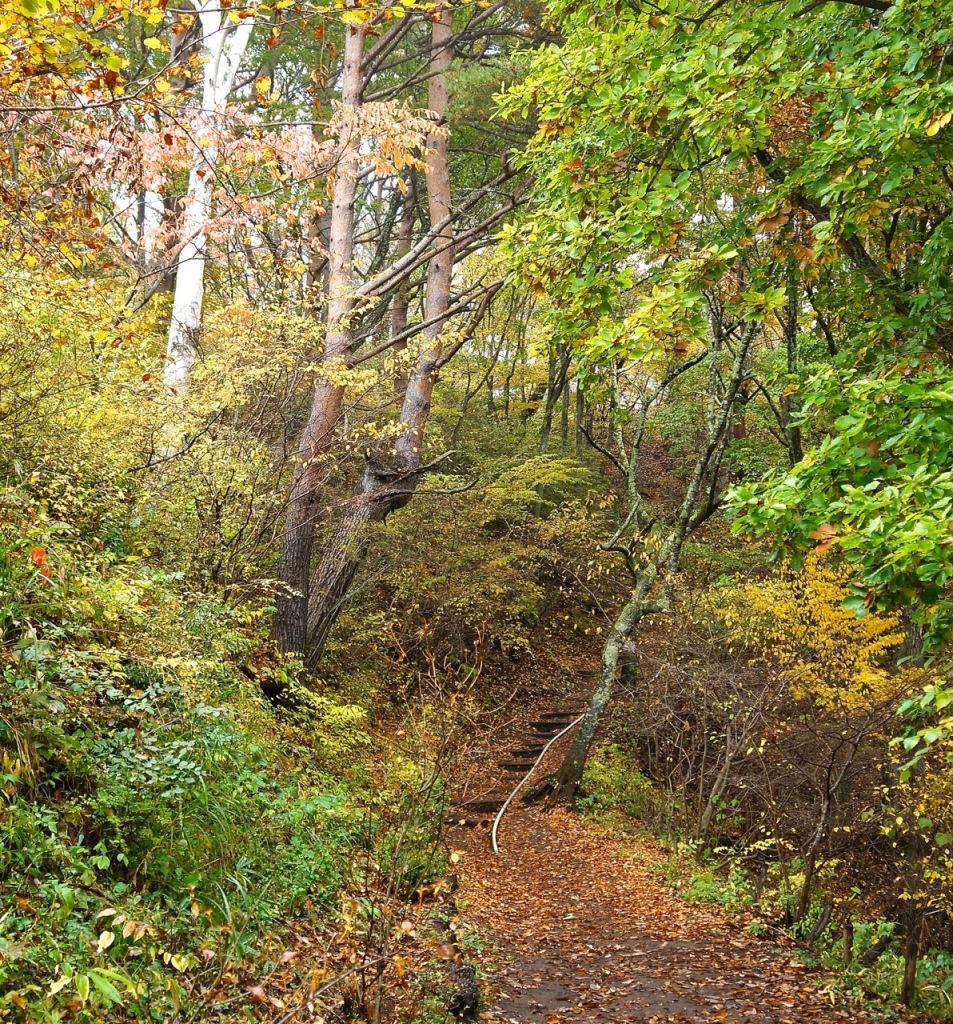 Autumn 2014: Kawaguchiko 08
