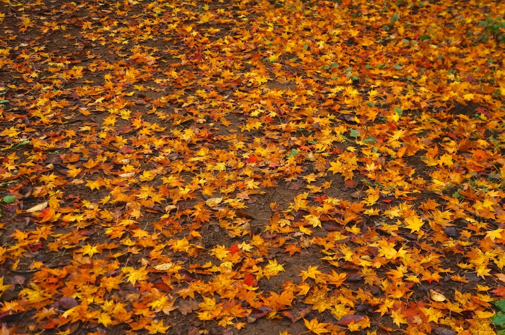 Autumn 2014: Kawaguchiko 12