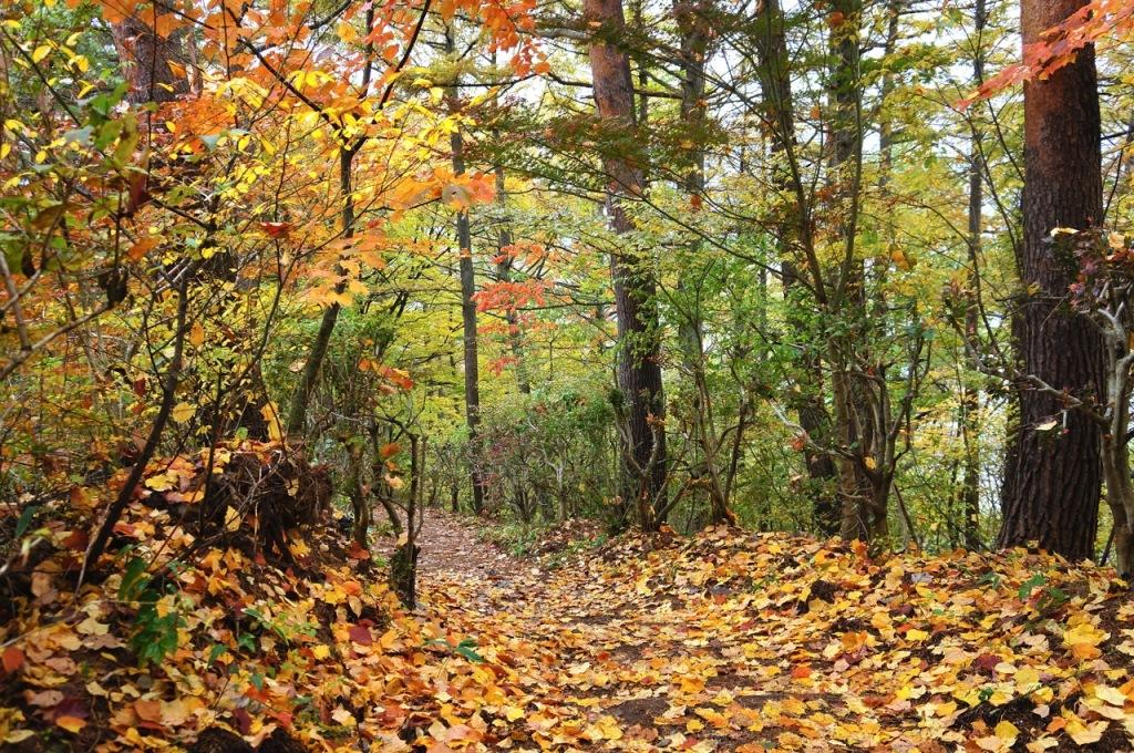 Autumn 2014: Kawaguchiko 10