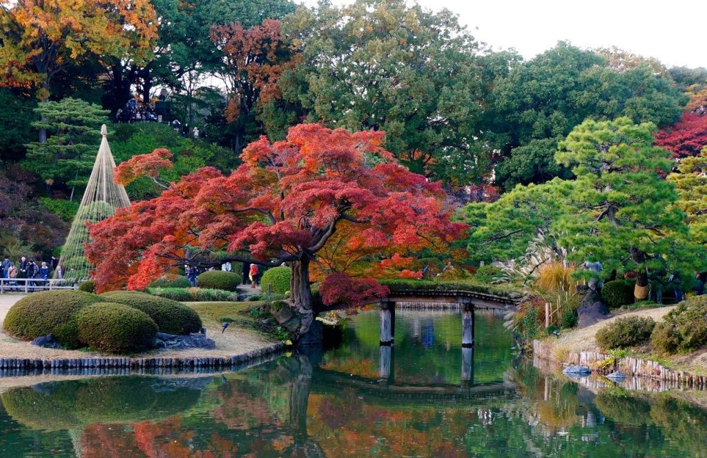 Autumn 2014: Rikugien Garden - 01