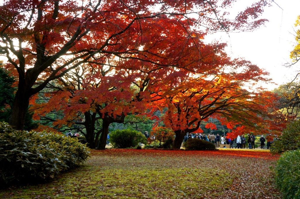 Autumn 2014: Rikugien Garden - 03