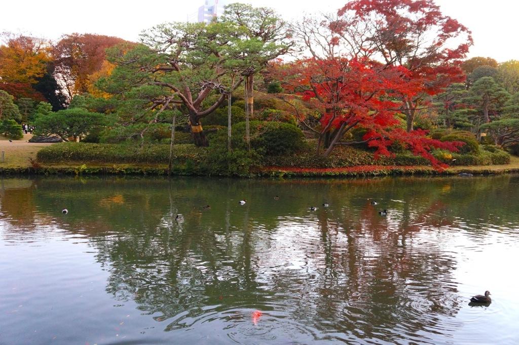 Autumn 2014: Rikugien Garden - 05