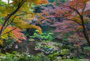Tonogayato_Garden02
