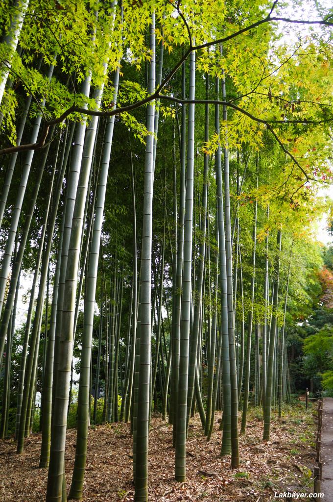 Tonogayato_Garden04