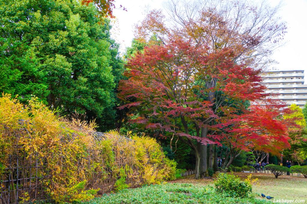 Tonogayato_Garden06