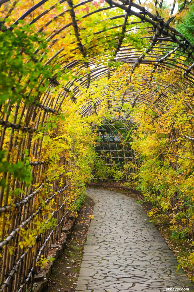 Tonogayato_Garden07