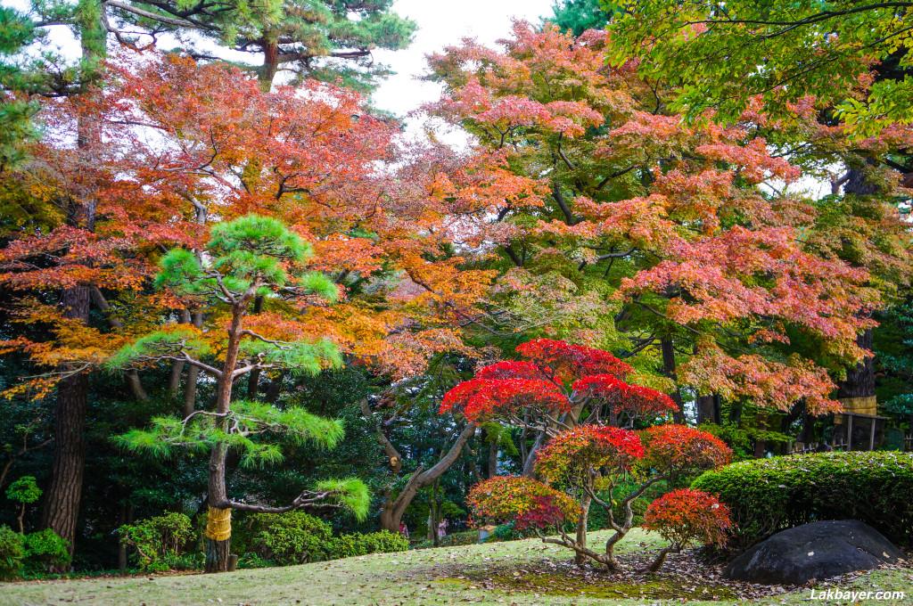 Tonogayato_Garden08