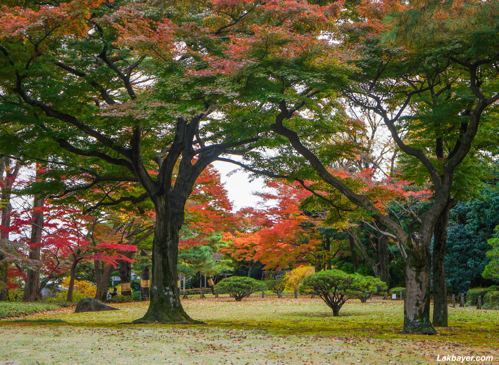 Tonogayato_Garden10