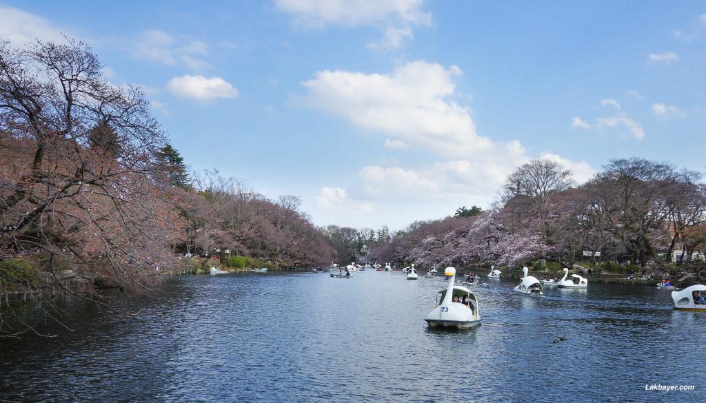 Inokashira_Park_01