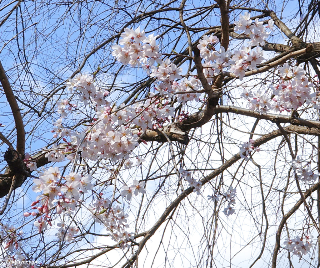 Inokashira_Park_02