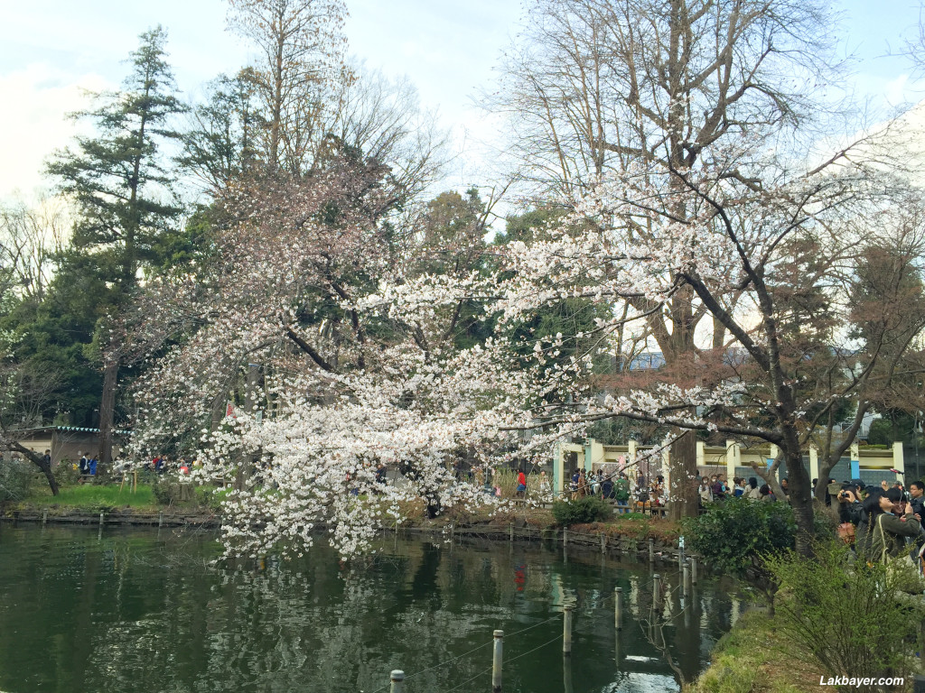 Inokashira_Park_04